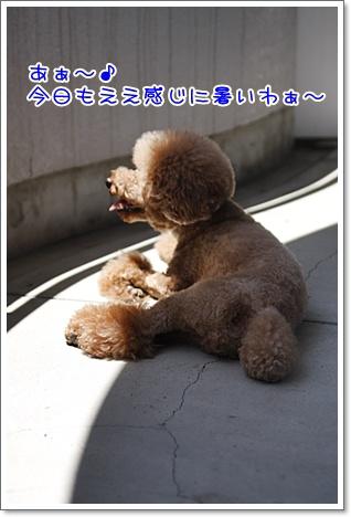 1_20100719220711.jpg
