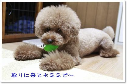 1_20101009224537.jpg