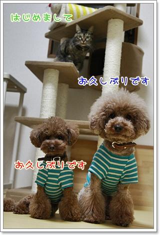 1_20101215214656.jpg
