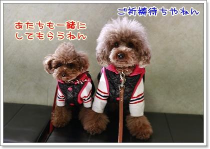 1_20110103213501.jpg