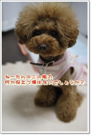 20_20100601010621.jpg