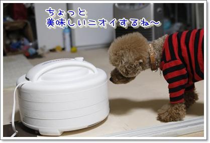 2_20100418224304.jpg