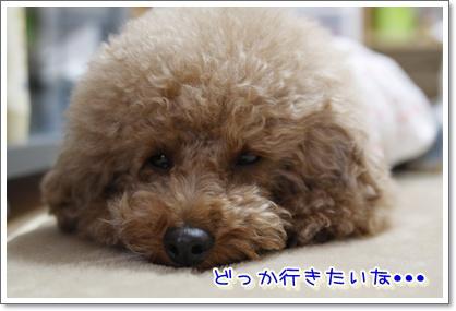 2_20100420191218.jpg