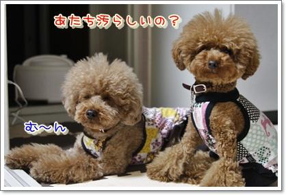 2_20100522001930.jpg