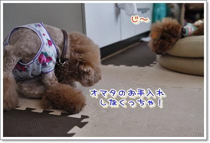 2_20100603235900.jpg