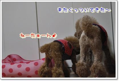 2_20100623223749.jpg