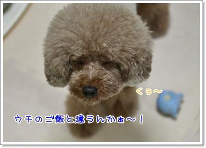 2_20100829015126.jpg