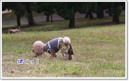 2_20101018215042.jpg