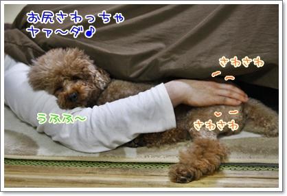 2_20110211092914.jpg