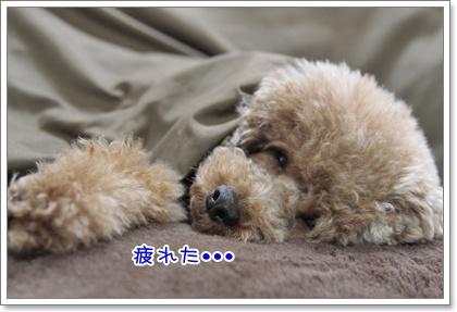 2_20110323230129.jpg