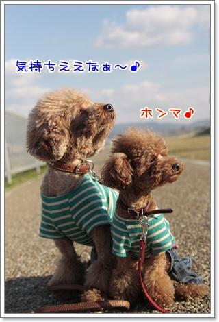2_20110328223232.jpg