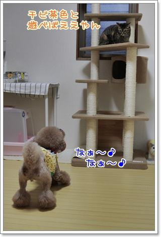 2_20110403202732.jpg