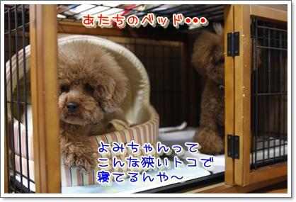 3_20100224185226.jpg