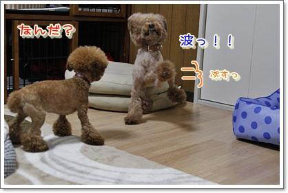 3_20100427011209.jpg