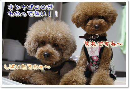 3_20100522001930.jpg