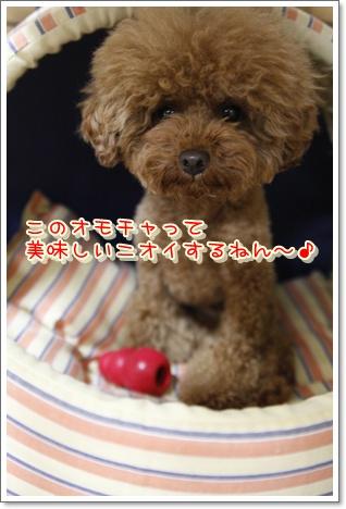 3_20100530012918.jpg