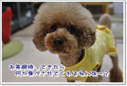 3_20100601004854.jpg
