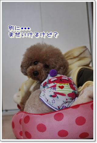 3_20100605003215.jpg