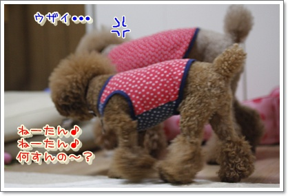3_20100623223749.jpg