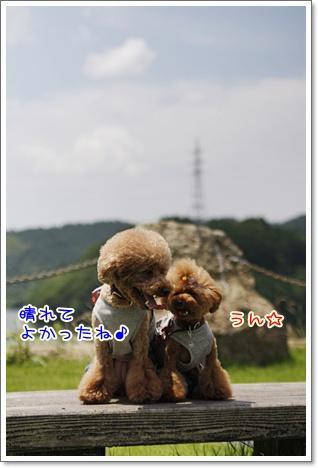 3_20100711164210.jpg