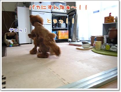 3_20100713002652.jpg