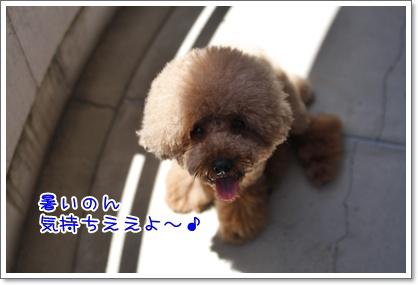 3_20100719220711.jpg