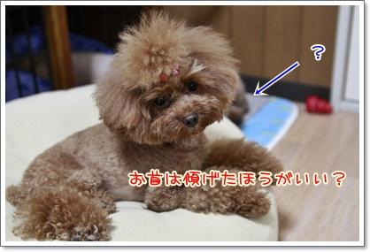 3_20100903012610.jpg