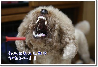 3_20100912000253.jpg