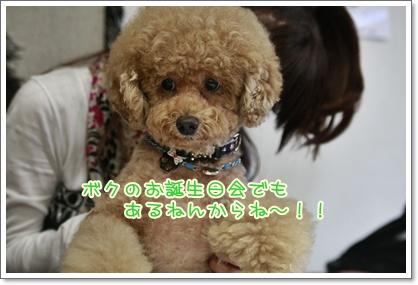 3_20101003220423.jpg