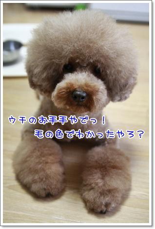 3_20101011231247.jpg