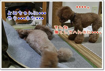 3_20101230222121.jpg