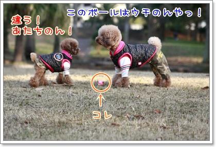 3_20110110223500.jpg