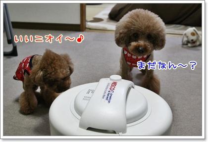 3_20110122135539.jpg