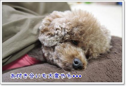 3_20110323230129.jpg