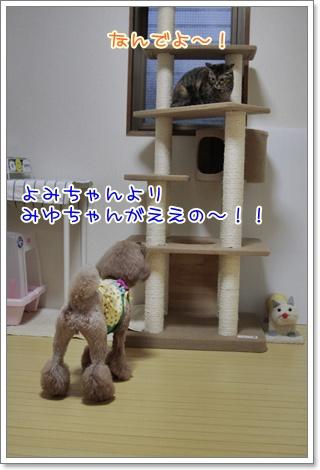 3_20110403202732.jpg