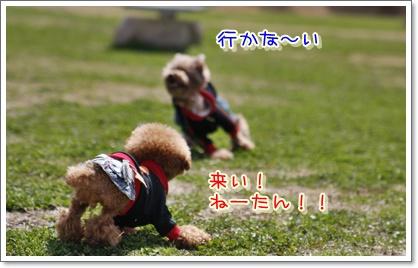 4_20100315230050.jpg