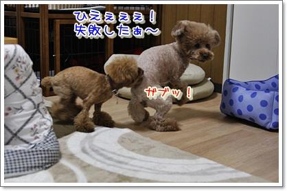 4_20100427011209.jpg
