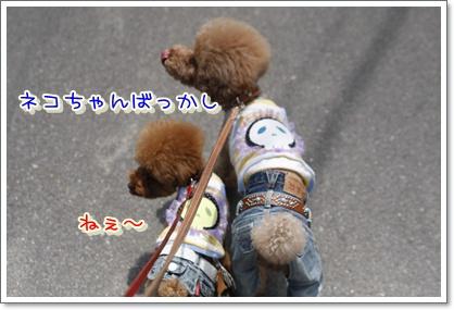 4_20100508205626.jpg