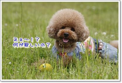 4_20100524011945.jpg