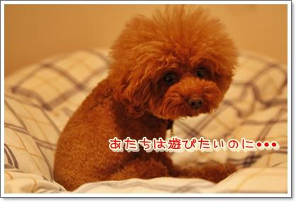 4_20100611002326.jpg