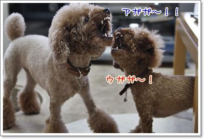 4_20100704225851.jpg