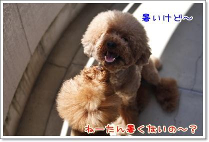 4_20100719220711.jpg