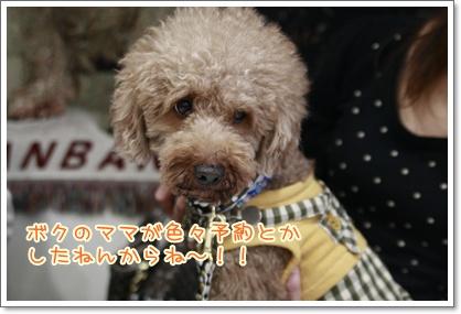 4_20101003220422.jpg