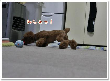 4_20101218004116.jpg