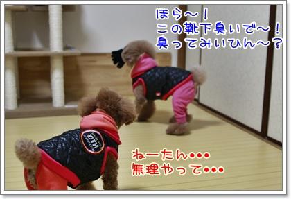 4_20110108221339.jpg