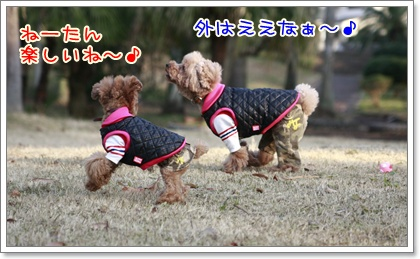 4_20110110223500.jpg