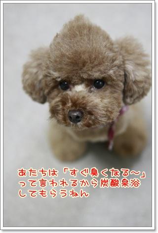 4_20110115220631.jpg