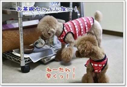 4_20110122135538.jpg