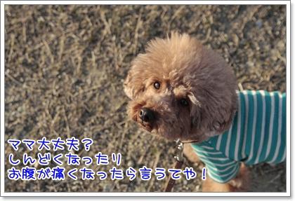 4_20110328223231.jpg