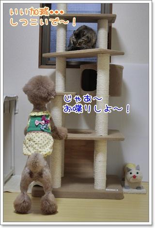 4_20110403202731.jpg